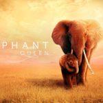 "Apple sdílel oficiální trailer pro film ""The Elephant Queen"""
