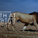 "Apple TV+ sdílela oficiální trailer pro nadcházející dokusérii ""The Earth at Night in Color"""
